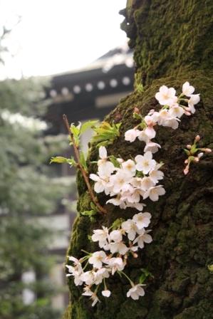 Yasukuni31