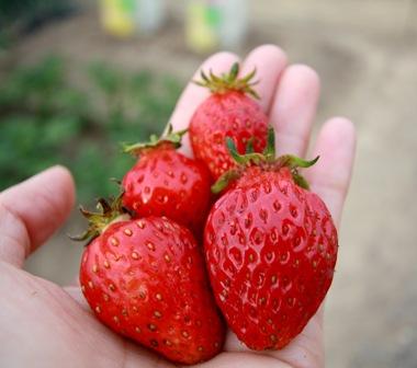 Berry_2_2